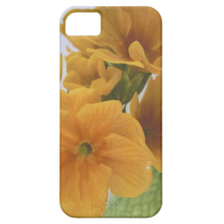 Yellow Winter Flowering Pansy iPhone 5 Cases