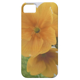 Yellow Winter Flowering Pansy iPhone 5 Covers