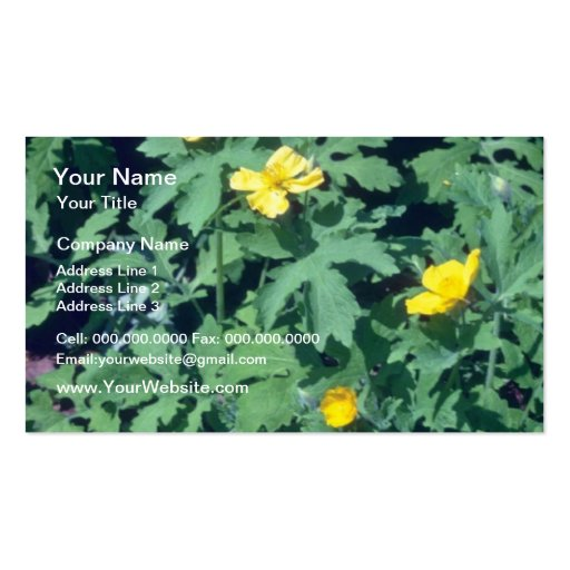 yellow Wood Poppy, (Stylophorum) flowers Business Card Templates