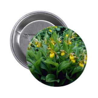yellow Yellow Lady's Slipper (Cypripedium Calceolu Pin