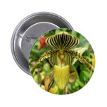 Yellow Zebra Stripes Orchid Buttons