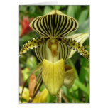 Yellow Zebra Stripes Orchid Greeting Card