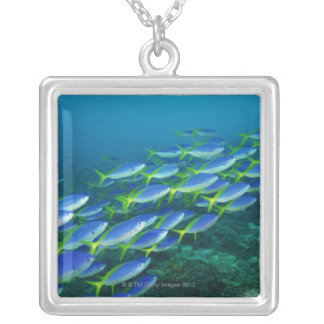 Yellowback fusiliers schooling to feed on silver plated necklace