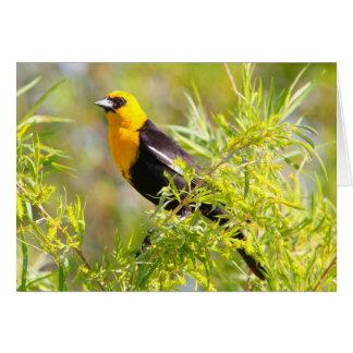 Yellowheaded Blackbird Card
