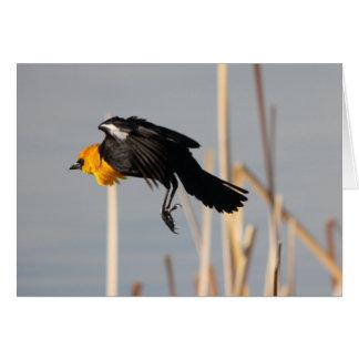 Yellowheaded Blackbird Greeting Cards