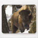 Yellowstone Bison Bull in Winter - Customised Mousepads
