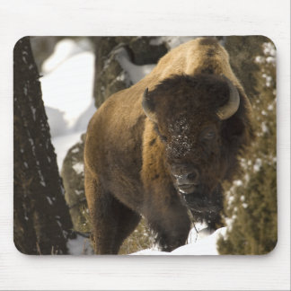 Yellowstone Bison Bull in Winter - Customized Mouse Mat