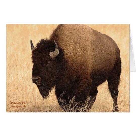 Yellowstone Bison Card