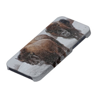 Yellowstone Bison iPhone 5/5S Cases