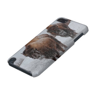 Yellowstone Bison iPod Touch 5G Cases