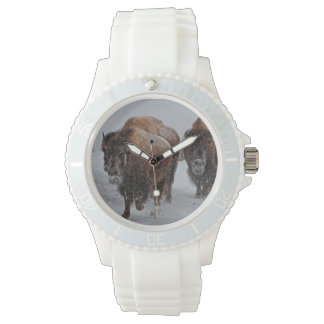 Yellowstone Bison Watch