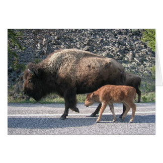 Yellowstone Buffalo Card