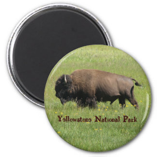 Yellowstone Buffalo Magnet