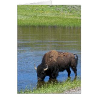 Yellowstone Buffalo Souvenir Card