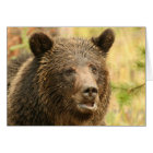 Yellowstone grizzley  card