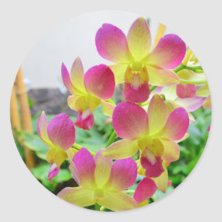 Yelow Pink Orchids Classic Round Sticker
