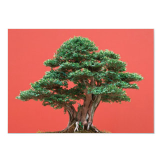 Yew bonsai 13 cm x 18 cm invitation card