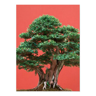 Yew bonsai 14 cm x 19 cm invitation card
