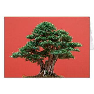 Yew bonsai greeting card