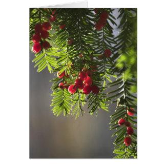 Yew Christmas card