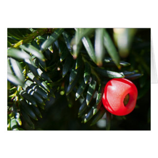 Yew Tree Berry Greeting Card