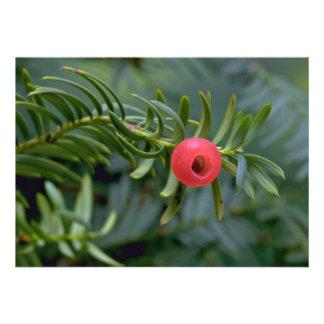 Yew tree fruit taxus brevifolia custom invitations