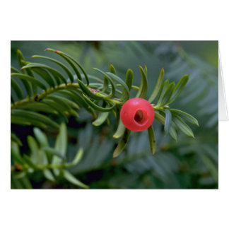 Yew tree fruit (taxus brevifolia) greeting card