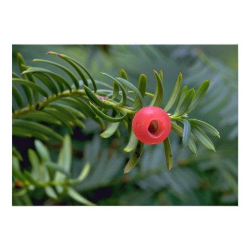 Yew tree fruit (taxus brevifolia) custom invitations