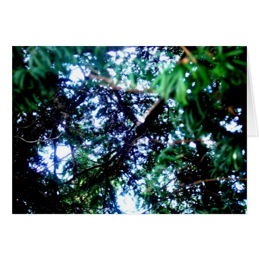 Yew Tree Greeting Card