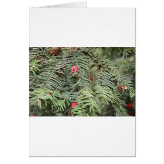 Yew tree, Milan, Italy Greeting Card
