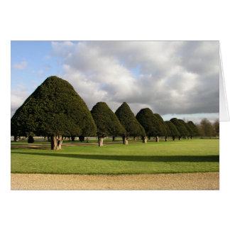 Yew Trees at Hampton Court, UK Greeting Card