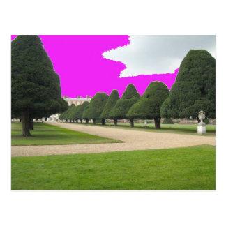 Yew Trees at Hampton Court, UK Postcard