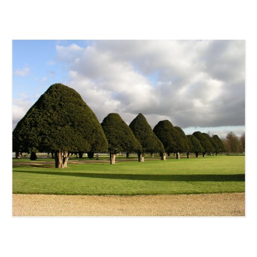 Yew Trees at Hampton Court, UK Postcards