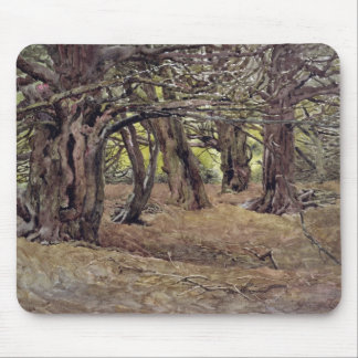 Yews in the Old Yew Wood Mouse Mat