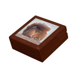 Yoga Squirrel Gift Box