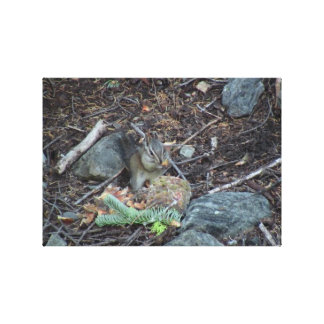 Yolly Bolly California Fauna Mammals Animals Gallery Wrap Canvas
