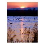 Yolo Wildlife Area Post Card