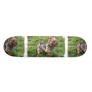 York Terrier Dog Skateboard