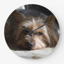 yorkhire / Silky Terrier wall clock