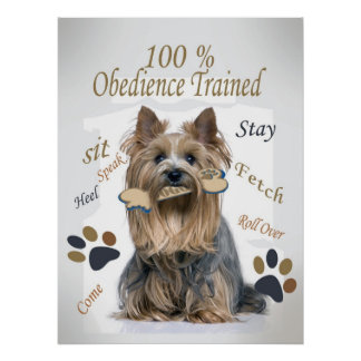 Yorkie 100 % Obedience Trained Poster