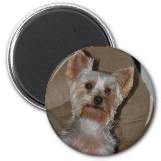 Yorkie 6 Cm Round Magnet