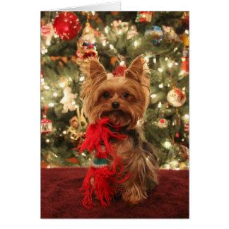 Yorkie Christmas 2 Card