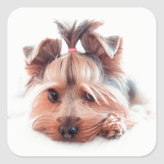 Yorkie Dog Square Stickers