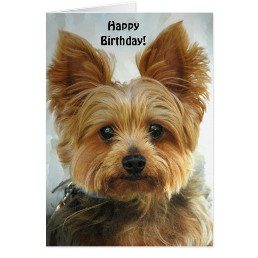 Yorkie - Happy Birthday Cards