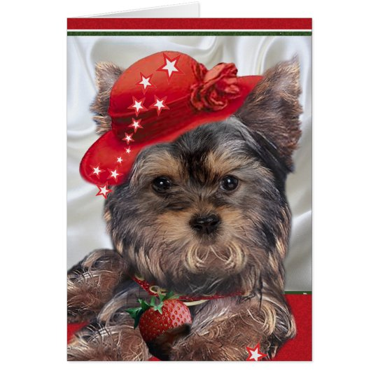 Yorkie in red hat cards
