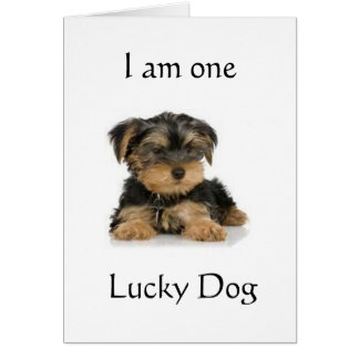 """""""YORKIE IS ONE LUCKY DOG"""" BIRTHDAY WISHES GREETING CARD"""