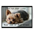 Yorkie on Window Sill Pet Sympathy Card