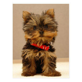 Yorkie Products Postcard