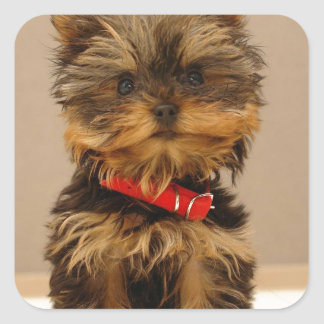 Yorkie Products Square Sticker
