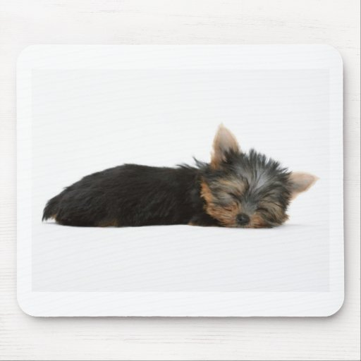 Yorkie Puppy Sleeping Mouse Pad
